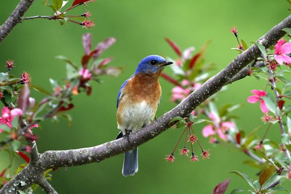 ekologi ekologi guérison kebijaksanaan penyembuhan bumi sagesse de la terre Beaute Beauty