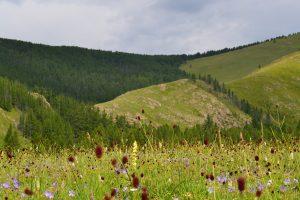 Mongolie - chamanisme (182)
